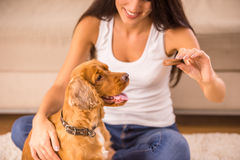 Woman with dog. Happy woman is playing with a dog and feeding him sitting on the floor at home Stock Images