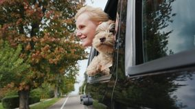 A woman with a dog looks out of the window of a traveling car together. Traveling with a pet concept. Slow motoin video stock video footage