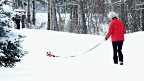Woman and dog in matching red jackets walking in snow after winter storm royalty free stock photo