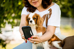 Woman, dog and mobile phone Royalty Free Stock Photos
