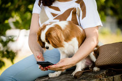 Woman, dog and mobile phone Royalty Free Stock Images