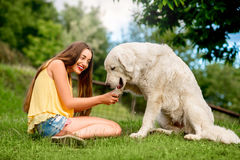 Woman with dog outdoors Stock Photography