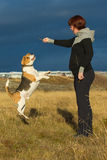 Woman and dog playing. A woman playing with a beagle dog in the sun royalty free stock photo
