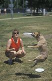 Woman and dog practicing at Canine Frisbee Contest, Westwood, Los Angeles, CA Royalty Free Stock Images