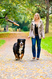 Woman and dog at retrieving stick game Royalty Free Stock Photography