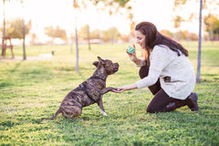 Woman and dog shaking hand and paw Royalty Free Stock Image