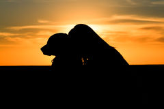 Woman dog silhouette. A silhouette of a woman and its dog Royalty Free Stock Images