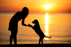 Woman and dog silhouettes on a beach at sunset. A silhouette of a dog and owner at sunset Stock Image