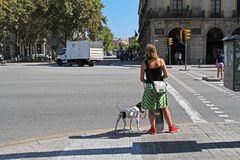 A woman with a dog standing at a traffic light and waiting for a green traffic light signal to cross the road in Barcelona Royalty Free Stock Images