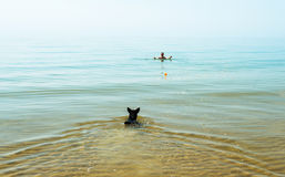 Woman and dog swimming Royalty Free Stock Photo