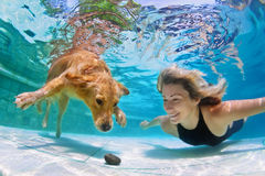 Woman with dog swimming underwater. Smiley woman playing with fun and training golden retriever puppy in swimming pool - jump and dive underwater to retrieve Stock Images