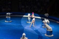 Woman dog trainer show at the circus. Royalty Free Stock Photos