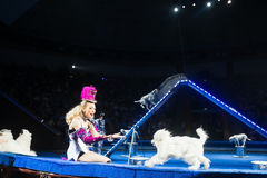 Woman dog trainer show at the circus. Stock Images