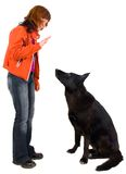 Woman is dog training Royalty Free Stock Photos