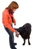 Woman is dog training Stock Image