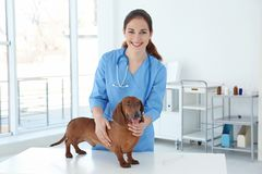 Woman with dog in veterinarian clinic stock photography
