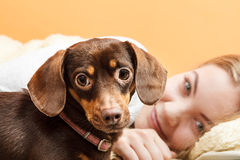 Woman with dog waking up in bed after sleeping. Woman with dog waking up in the morning after sleeping. Young girl laying in bed Royalty Free Stock Image