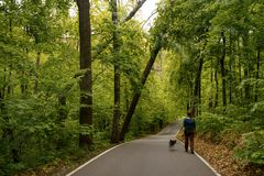 A woman with a dog are walking along a path in the park. Green trees felled after bad weather royalty free stock photography