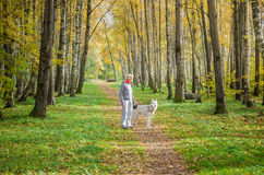 Woman with dog walking in the birch alley, sunny autumn day Stock Photo