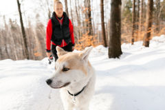 Woman and dog walking in winter mountains Stock Photo