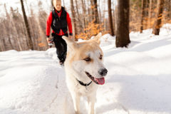 Woman and dog walking in winter mountains Stock Images