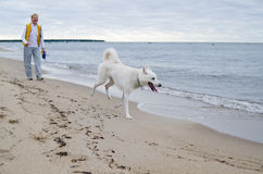 The woman with a dog walks along coast Royalty Free Stock Photos