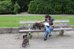 Woman with dogs on a bench. Friendly woman with dogs on a bench in the park Royalty Free Stock Photo