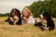 Woman with dogs. Woman with bernese mountain dogs lying on dry grass, looking at camera Stock Photos