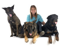 Woman and dogs Royalty Free Stock Images