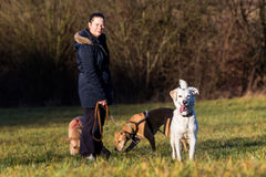 Woman and Dogs outside Stock Image