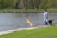 Woman and dogs at  park Stock Photography