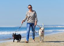 Woman and dogs on the beach. Woman and dogs walking on the beach Royalty Free Stock Photography