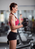 Woman doing biceps curl with dumbbells Royalty Free Stock Image