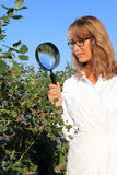Woman doing Food inspection and quality control with magnifying glass royalty free stock images