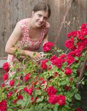 Woman doing garden work cutting the roses Stock Photos