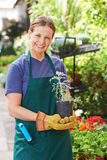 Woman doing garden work in nursery shop Royalty Free Stock Photo