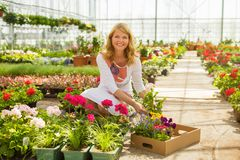 Woman doing gardening Royalty Free Stock Photo