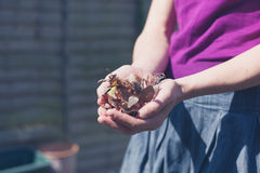 Woman doing gardening Royalty Free Stock Photography