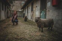 Woman Doing Squat Near the Gray Sheep Royalty Free Stock Photo