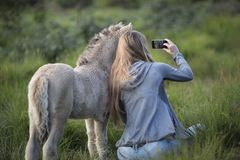 Woman Beside Donkey Taking Selfie on Grass Stock Photography