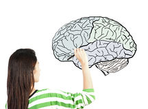 Woman drawing human brain diagram Stock Photos