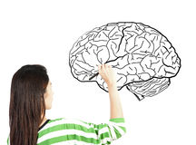 Woman drawing human brain diagram Stock Images