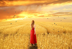Woman in dress walking through open autumn wheat field Stock Images