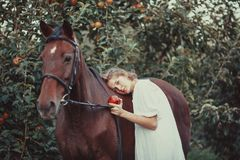 A woman feeds a horse. A woman dressed in a white dress, feeds a horse with a red apple Stock Images