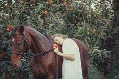 A woman feeds a horse. A woman dressed in a white dress, feeds a horse with a red apple Royalty Free Stock Image