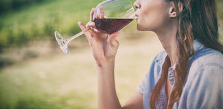 Woman drinking red wine. At vineyard stock image