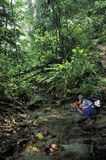Woman drinking from stream in rain forest. NORTHERN TRINIDAD, TRINIDAD AND TOBAGO, MAY 24, 1998. Tourist drinking water in a stream near the coast of northern Stock Image