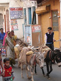 A woman drives her donkeys to market Royalty Free Stock Images