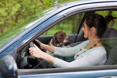 Woman driving car with a dog Stock Image