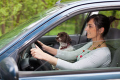 Woman driving car with a dog Stock Photos
